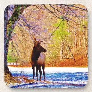 Elk in the snow coasters