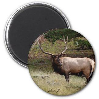 Elk in the Wild 2 Inch Round Magnet