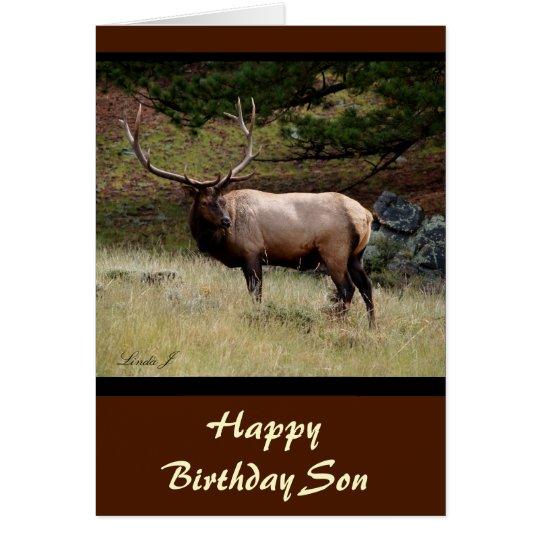Elk in the Wild Card