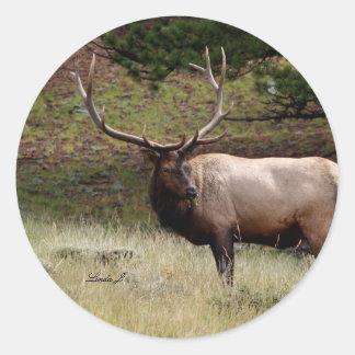 Elk in the Wild Classic Round Sticker