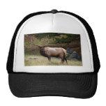 Elk in the Wild Mesh Hat