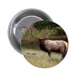 Elk in the Wild Pinback Buttons