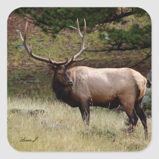 Elk in the Wild Square Sticker