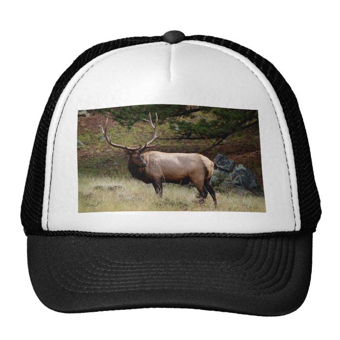 Elk in the Wild Trucker Hat