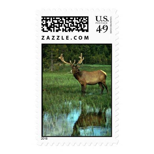 Elk in Velvet Stamps