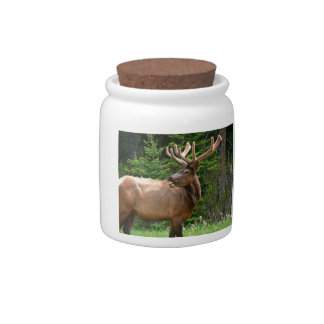Elk in Velvet Unique Wildlife Gift Ideas Hunters Candy Dishes