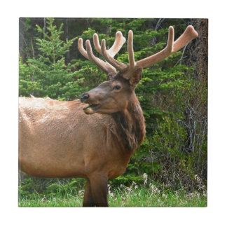 Elk in Velvet Unique Wildlife Gift Ideas Hunters Tile