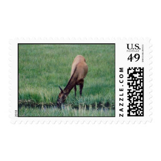 Elk in Yellowstone Postage