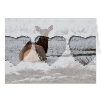Elk Interest Card