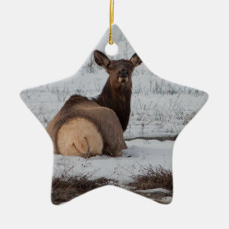 Elk Interest Ceramic Ornament