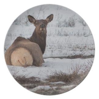 Elk Interest Plate