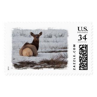 Elk Interest Postage Stamp