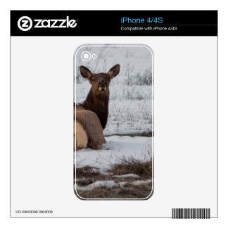 Elk Interest iPhone 4S Decal