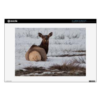 "Elk Interest 13"" Laptop Decal"