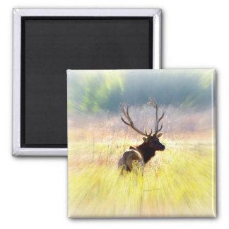 """Elk """"Looking Back"""" 2 Inch Square Magnet"""
