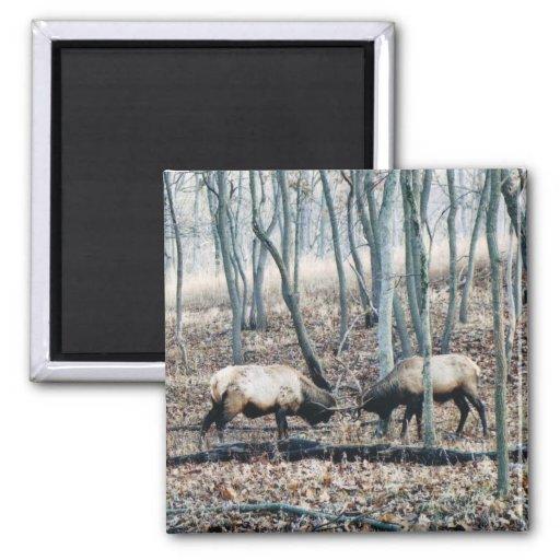 Elk Magnets