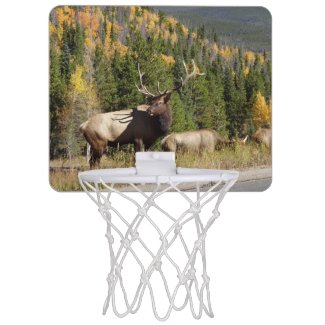 Elk mini basketball hoop