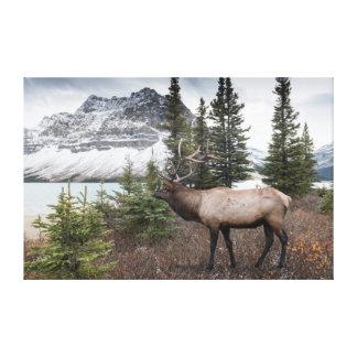Elk near Bow Lake Canvas Print