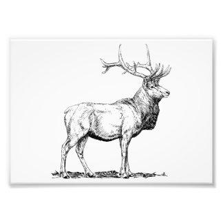 Elk Art Photo