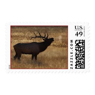 elk stamp