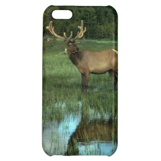 Elk Reflecting - Savvy iPhone 5 Cover