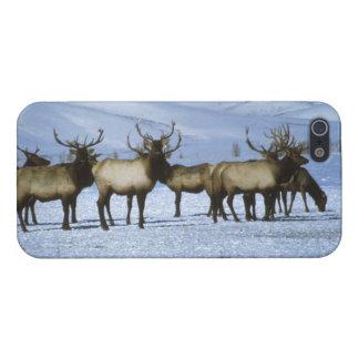 Elk - Savvy iPhone 5 Cover