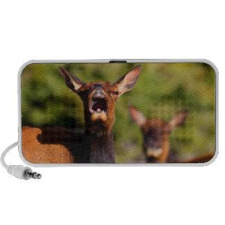 elk singing speakers