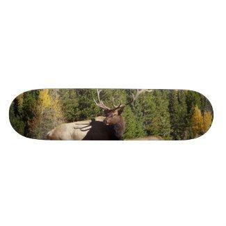 Elk Skateboard