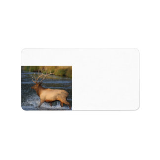 elk splashing in the water label