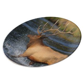 elk splashing in the water plate