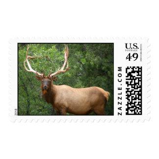 Elk Stamps