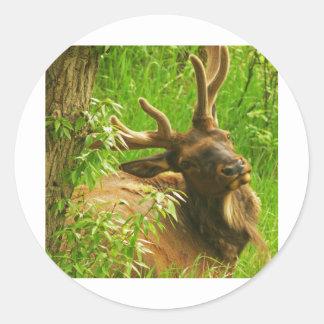 Elk summer round stickers