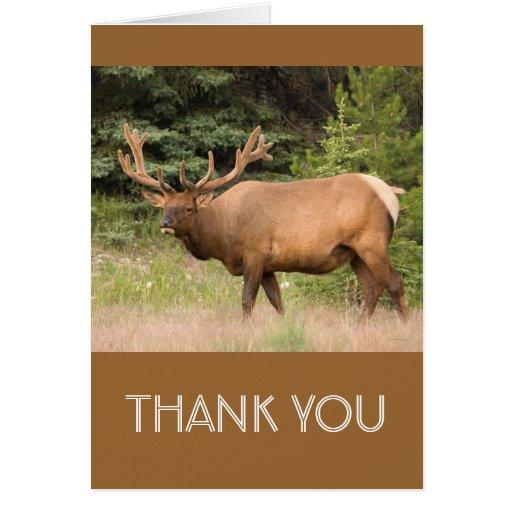 Elk Thank You Cards