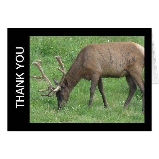 Elk Thank You Greeting Card