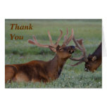 elk Thank You Note Greeting Card
