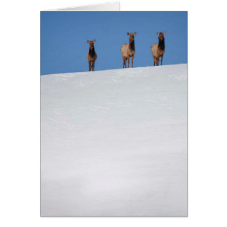 Elk Trio Stationery Note Card