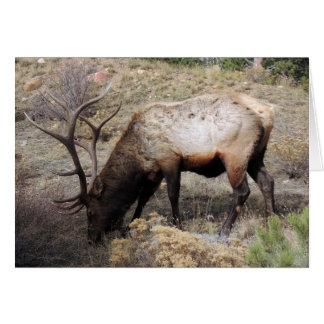 Elk Wapiti Cervus Canadensis Greeting Card