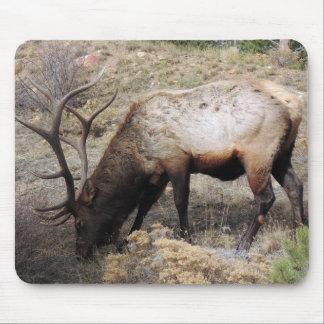 Elk Wapiti Cervus Canadensis Mouse Pad