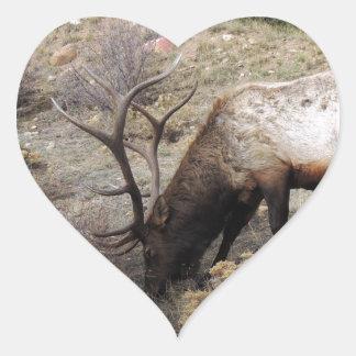 Elk Wapiti Cervus Canadensis Stickers