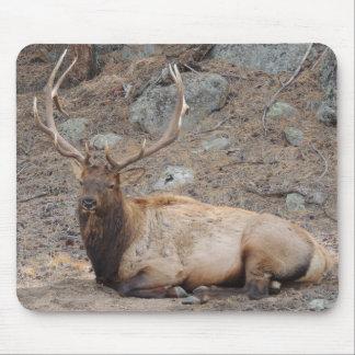 Elk Wapiti Mouse Pad