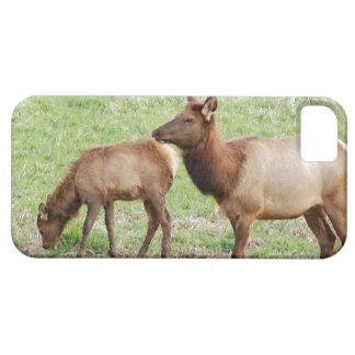 Elk Wildlife Animal Photography iPhone 5 Case