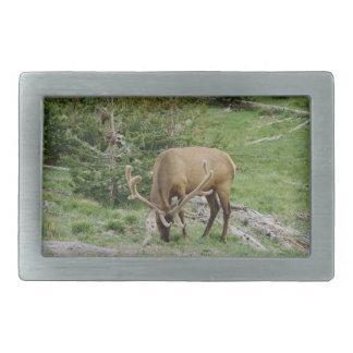 Elk With Velvet Antlers Belt Buckle