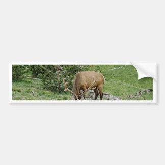 Elk With Velvet Antlers Bumper Sticker
