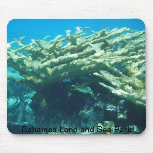 Elkhorn Coral in Exumas Land and Sea Park, Bahamas Mouse Pad