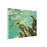 Elkhorn coral in Florida Keys Canvas Print