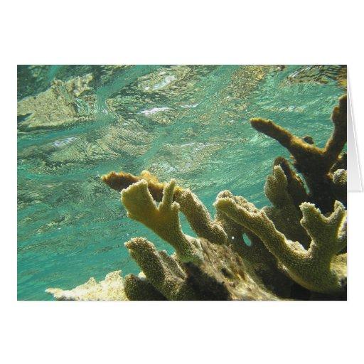 Elkhorn coral in Florida Keys Card