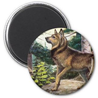 Elkhound de Nowegian Iman