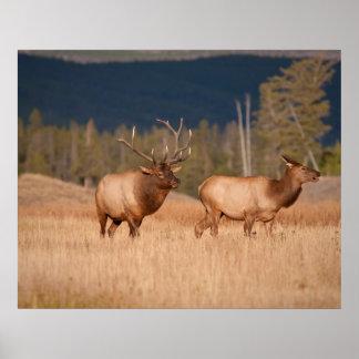 Elks Posters