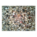 Ella vende cáscaras del mar en la playa en la Flor Tarjeta Postal