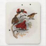 Elliot - Cicinnurus regios - rey ave del paraíso Mouse Pads